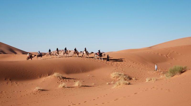 nomadzi na wielbłądach