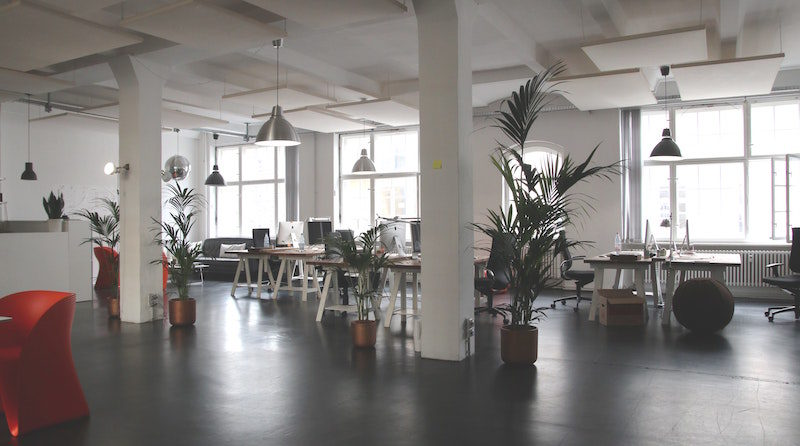 Rośliny w przestrzeni biurowej.